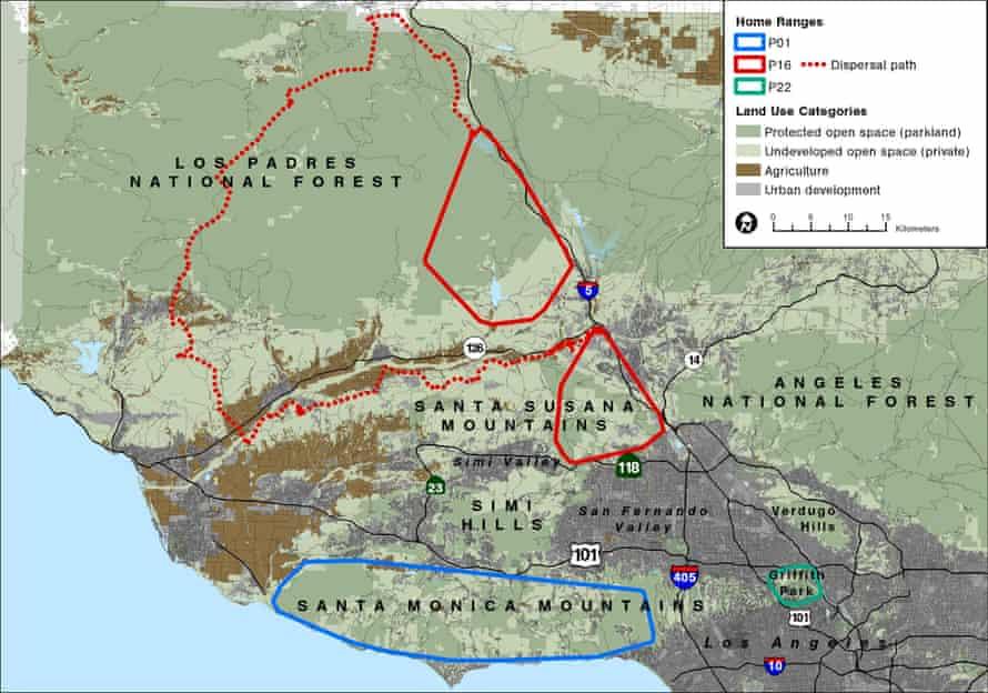 California mountain lions - home ranges