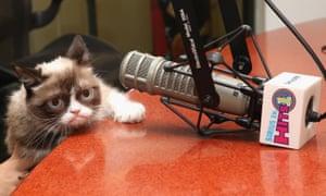 Grumpy Cat visits SiriusXM Studios on October 2015 in New York City