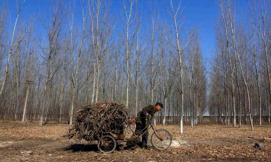 A farmer pushes his tricycle loaded with firewood along a track on the outskirts of Beijing