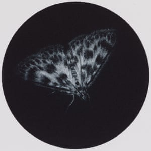Small Magpie moth mezzotint by printmaker and artist Sarah Gillespie
