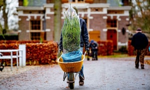Sustainable Christmas trees for sale on the Duivenvoorde estate, Voorschoten, Netherlands