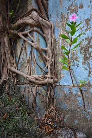 A tree growing in the middle of busy Hong Kong, by Romain Jacquet-Lagreze from his Wild Concrete photo series