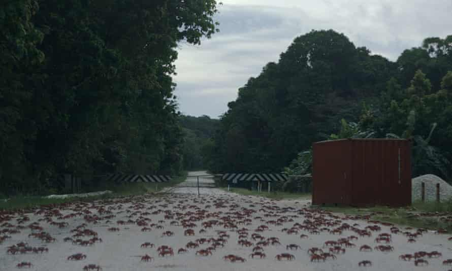 Some of the island's land crabs