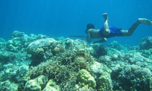 A Bajau diver hunting fish on the reef.