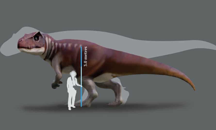 A reconstruction of a Jurassic dinosaur track-maker from southern Queensland in front of a silhouette of the largest known T rex
