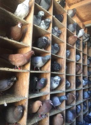 A pigeon loft in Bushwick, Brooklyn
