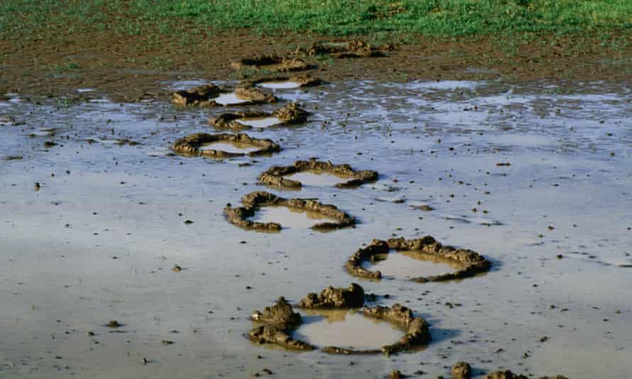 These elephant footprints were left behind in the mud after rained in Amboseli National Park,Kenya.