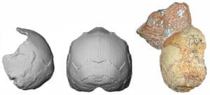 The Apidima 1 partial cranium (right) and its reconstruction. The rounded shape of the skull is a unique feature of modern humans and contrasts with Neanderthals and their ancestors