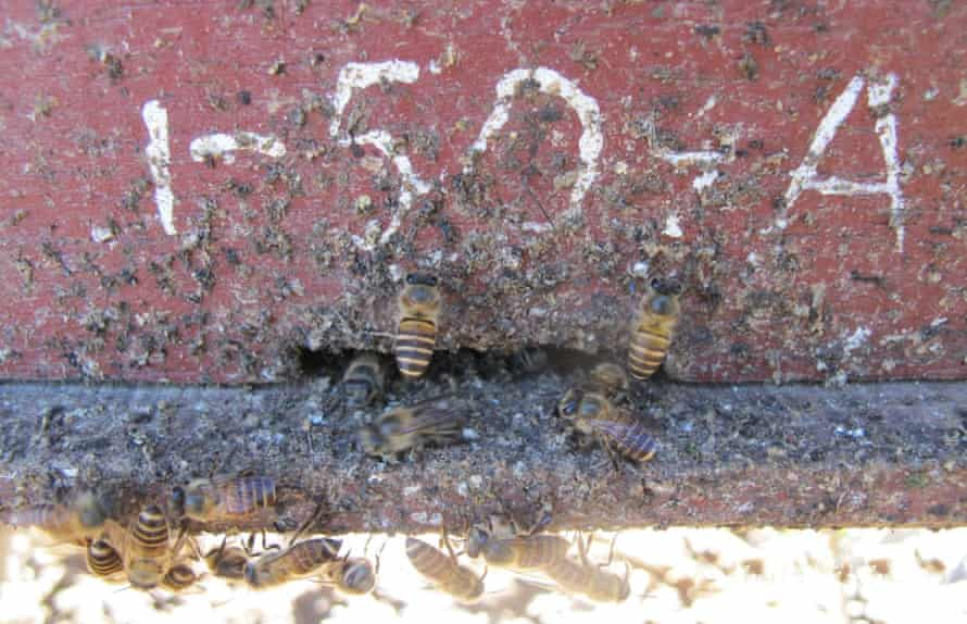 Spots of dung on hive