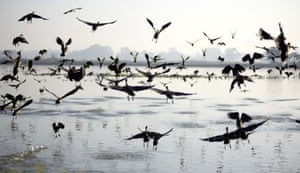 A flock of lesser whistling ducks fly across a wetland in Nonoi village in the Nagaon district of Assam, India