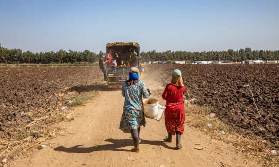 Women walk to work in fields following lorry
