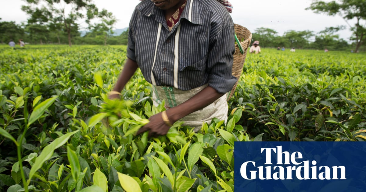 Workers exploited at farms supplying UK supermarkets: report - The Guardian