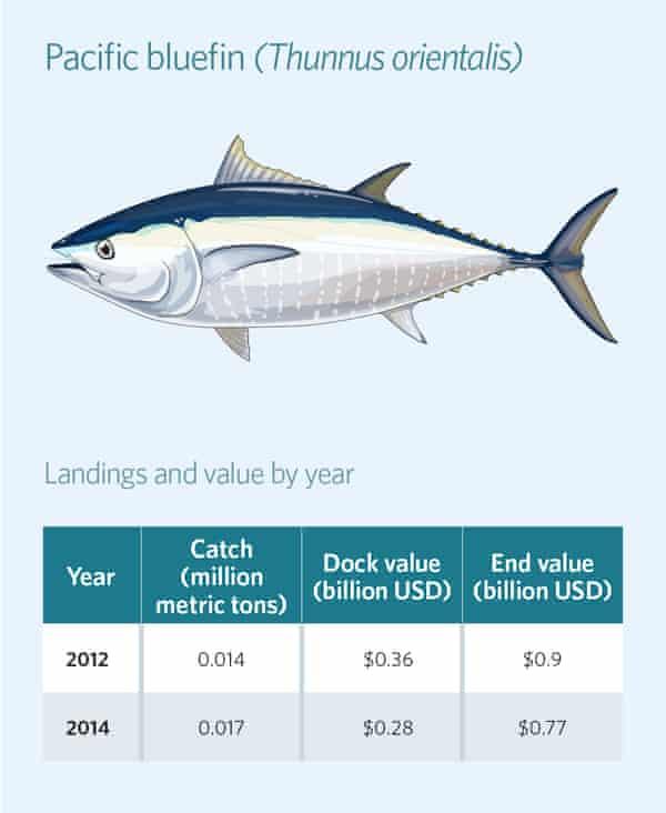 Pacific bluefin