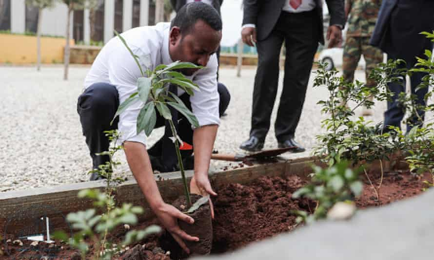 The prime minister, Ahmed Abiy, plants a tree in Addis Ababa, Ethiopia.