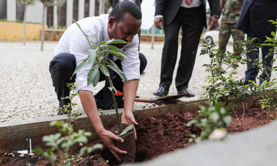 the ethiopian prime minister abiy hhmed planting a sapling in july 2019
