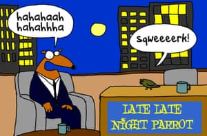 A night parrot at a late-night talkshow