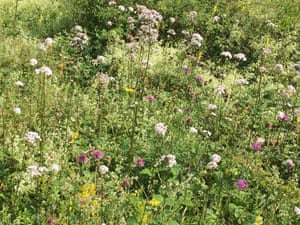 Valerian, knapweed, hedge bedstraw, agrimony, St John's wort, and lady's bedstraw.