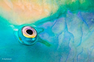 Eye in focus by Ally McDowell (USA/UK) Ally often focuses on colours and patterns underwater. She nearly threw away an image of a fish's eye but her partner asked to see it and then turned it upside down. Ally saw it was an unusual, abstract view and so on a night dive, when the parrotfish were sleeping, she focused on creating a similar image.