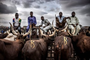 A group of herdsmen selling cows wait for customers at Kara cattle market in Lagos