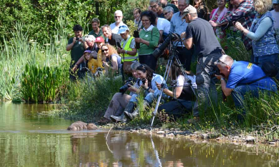 A pair of beavers being reintroduced into a river near Truro, Cornwall, in 2017 get plenty of attention from the media.