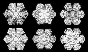 Wilson Bentley's photos of snowflakes, circa 1902.