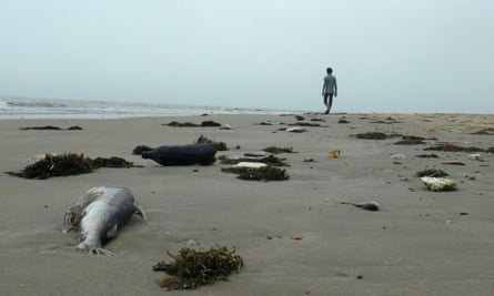 A beach in Quang Trach district is strewn with dead fish after the toxic spill in April 2016