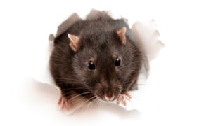 Rat poison is among the chemicals on the list.