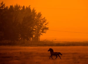 A horse runs through a smoky field in Canada