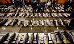 Wholesalers survey fresh tuna at the Tsukiji fish market.