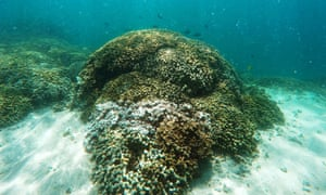 A patch of coral reef is in Hawaii''s Kaneohe Bay where Nasa scientists announced the launch of the new campaign