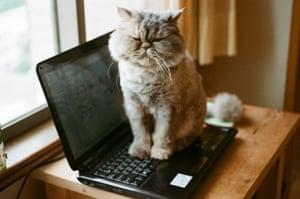 Cat sitting on keyboard of laptop