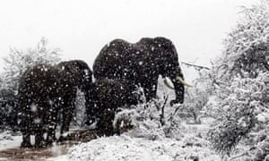 A cold front in South Africa last week saw snow fall across parts of the country.