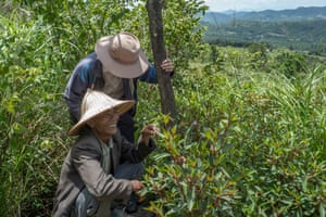 The head of Xa Bai village, Ho Van Vy, crouching, inspects an area of the Bac Huong Hoa nature reserve that is still affected by Agent Orange left over from the Vietnam war. The area is characterised by Yankee grass that grows there and is now part of a reforestation project by Viet Nature.
