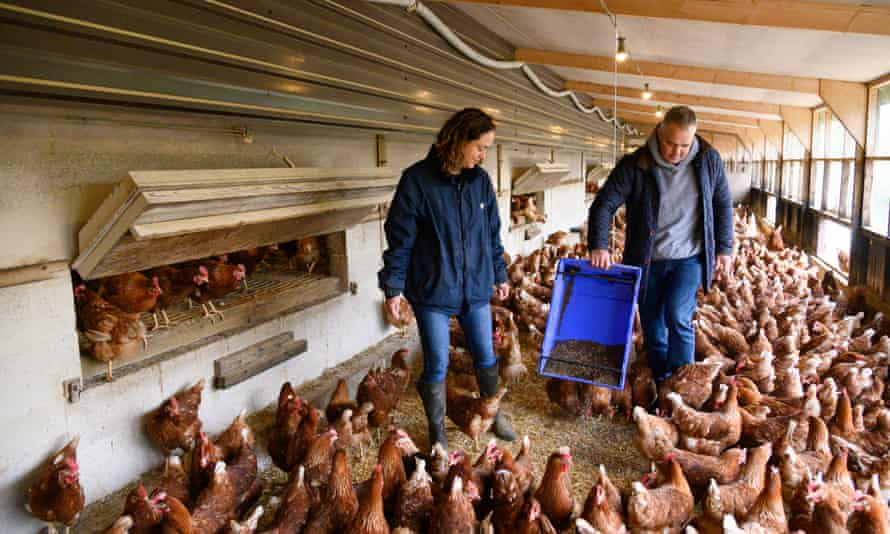 Inside a chicken shed