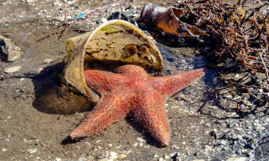 A sea star caught in a plastic cup in Brentwood Bay, Saanich Peninsula, Vancouver Island.