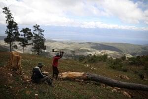 A man cuts a tree