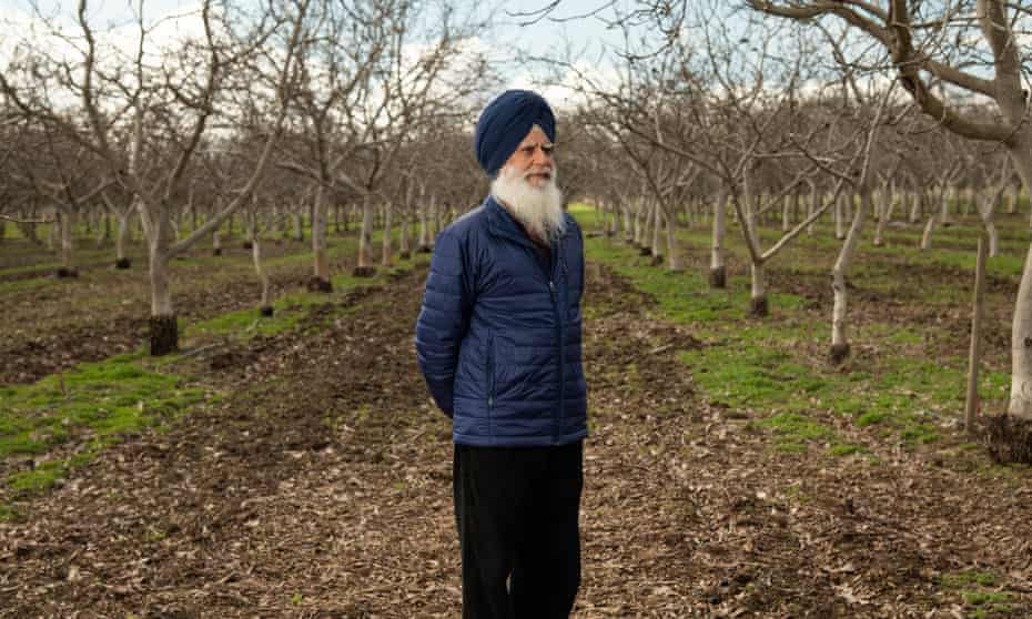 Sukhcharan Singh poses for a portrait on his walnut farm in Yuba City, Calif. on Friday, January 29, 2021.