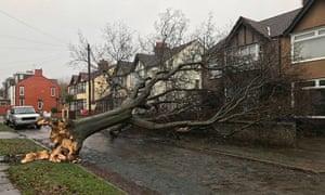 A fallen tree in Aigburth, Liverpool