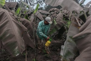 A farmer cleans his plants covered by volcanic ash from the eruption of Mount Semeru