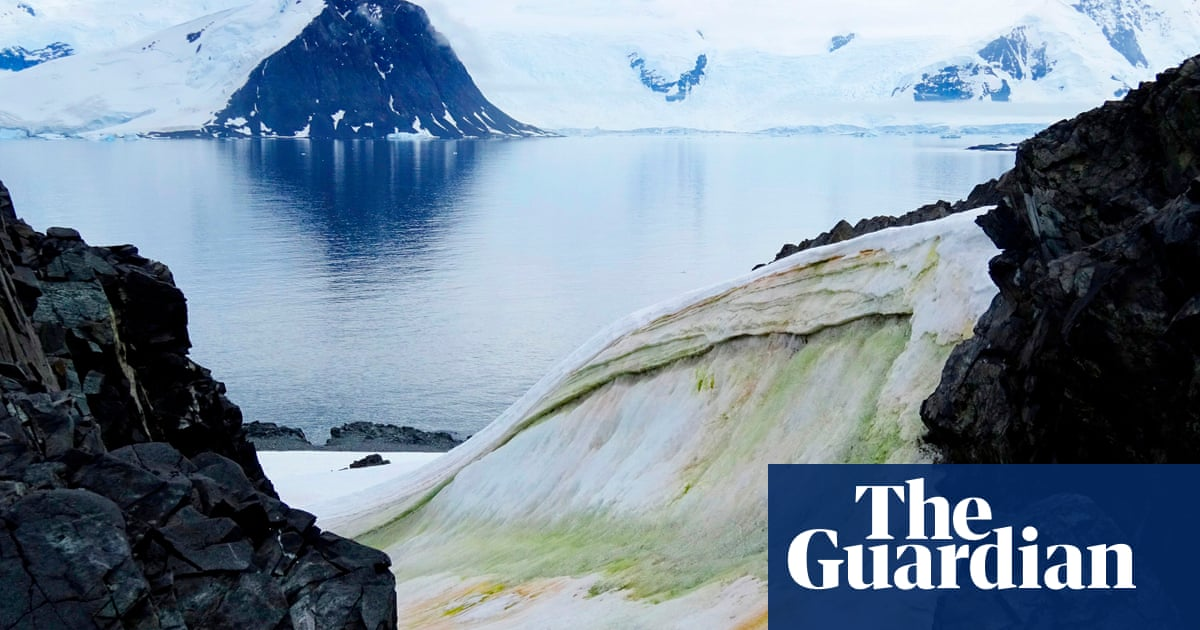 Climate change is turning parts of Antarctica green, say scientists - The Guardian