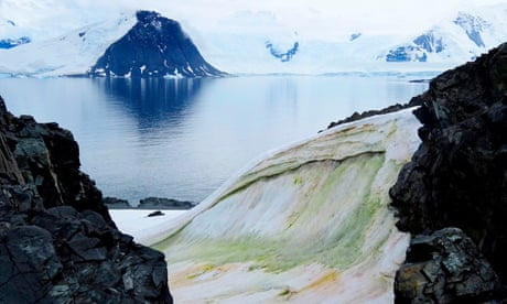 Climate change is turning parts of Antarctica green, say scientists