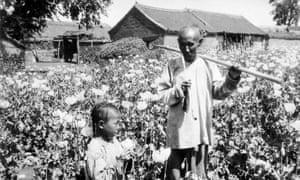 An opium poppy field In Manchuria around 1925-1935.