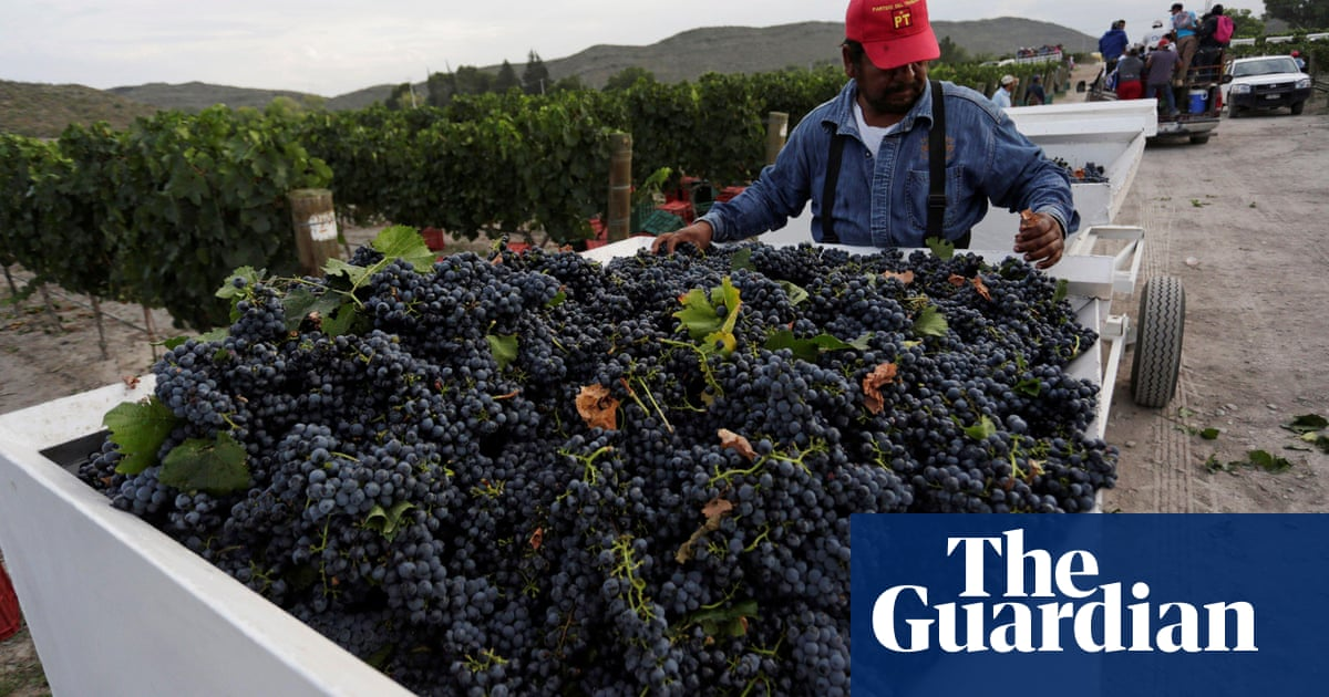 'A focus on quality': Mexico's wine industry bears fruit in revival of tradition