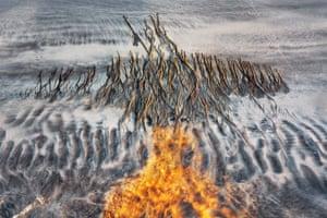 Runner-up, nature's studio: The rebirth of Phoenix