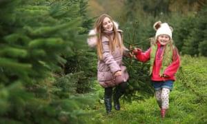 Children pick up a freshly cut Christmas tree