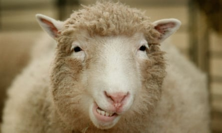 Dolly the cloned sheep.