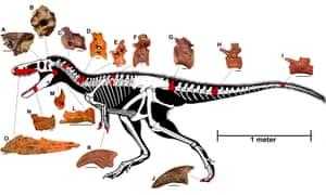 Bone parts of Timurlengia euotica