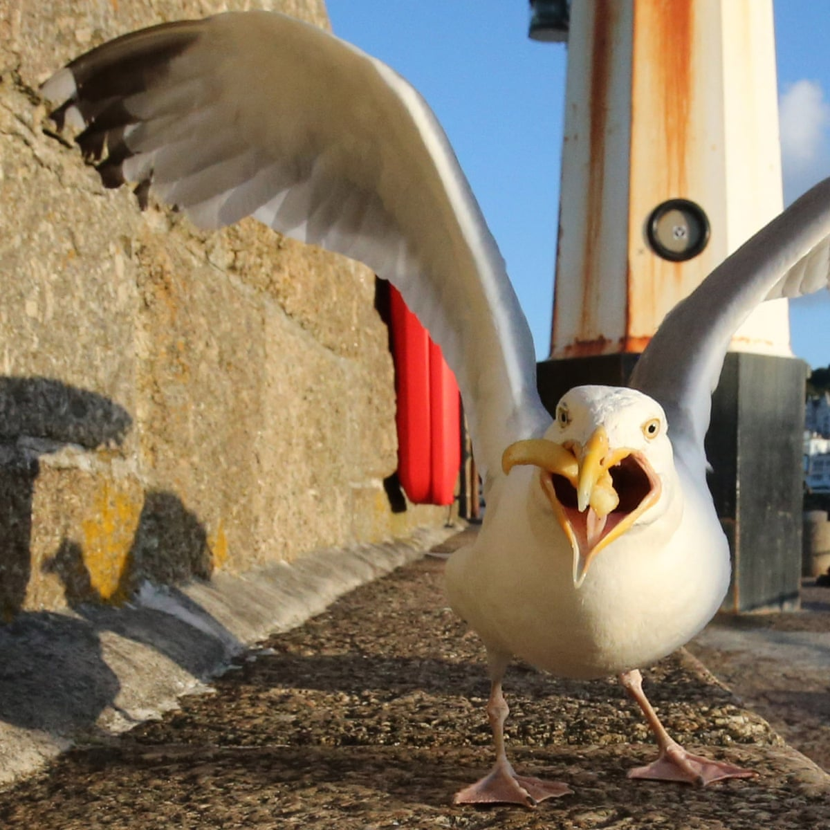 Seagull Rage Why Humans And Birds Are At War In Britain Birds The Guardian
