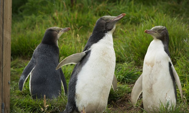 New Zealand's new plan to save our seabirds is strong on rhetoric but light on action