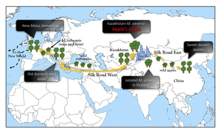 A map depicting the apple's journey along the silk road
